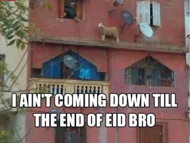 Funny pic for Eid